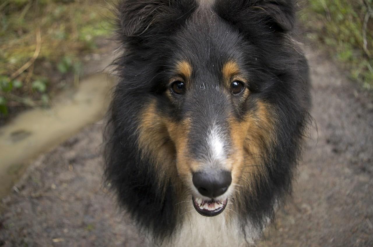 Pasa un gran día con tu perro antes de eutanasiarlo