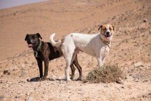 perros teniendo relaciones