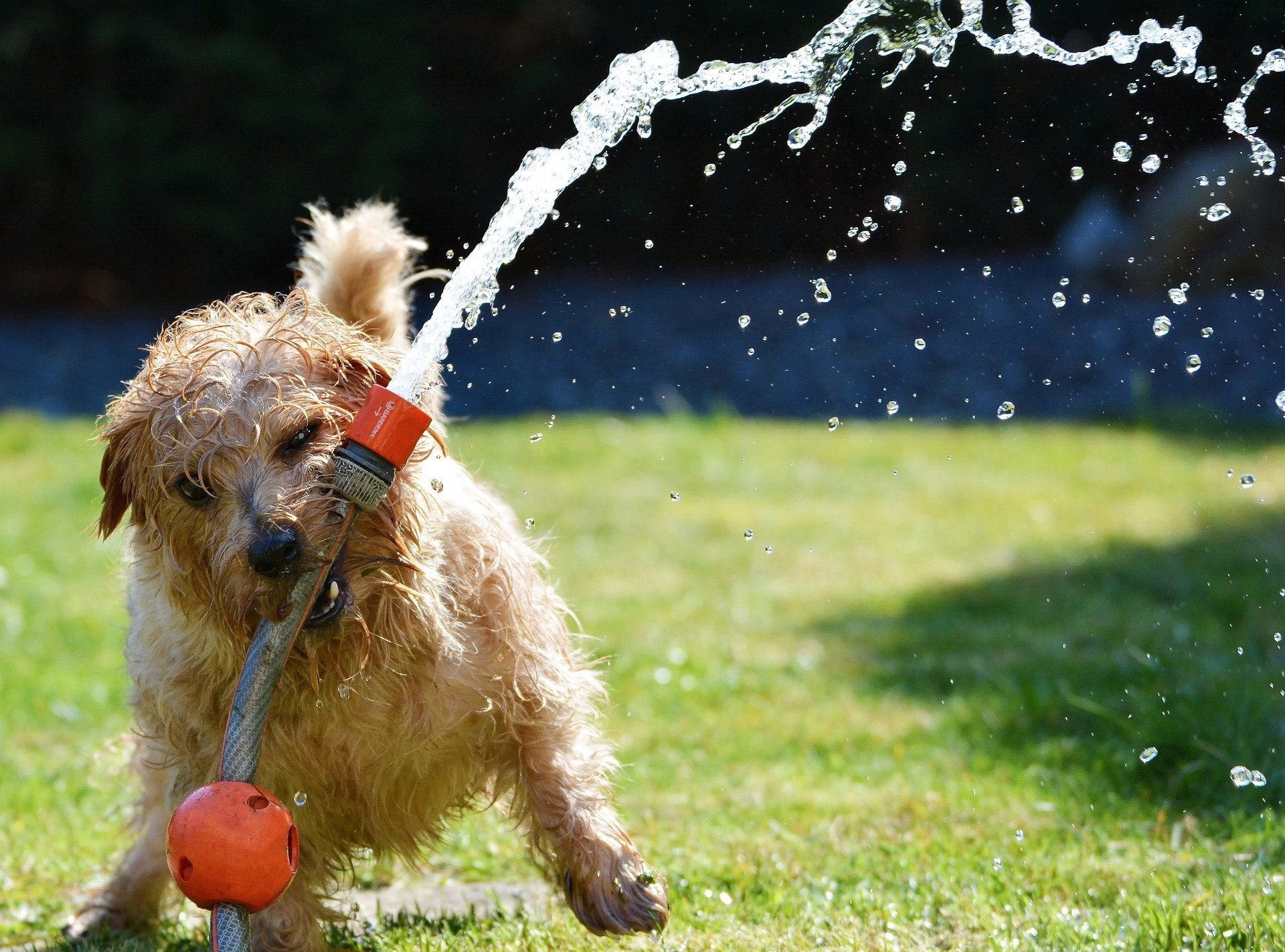 Descubre qué hacer si tu perro vomita