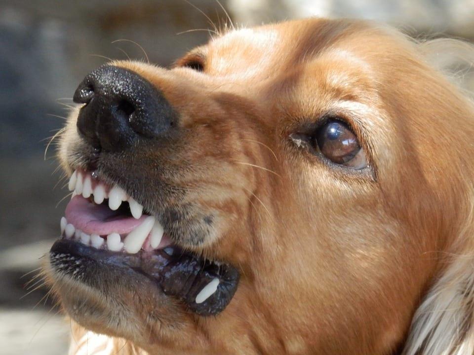Factores de riesgo si tenemos un perro agresivo