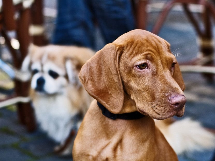 aloe vera es importante para la piel de nuestro perro