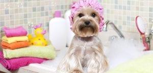 Baño del perro