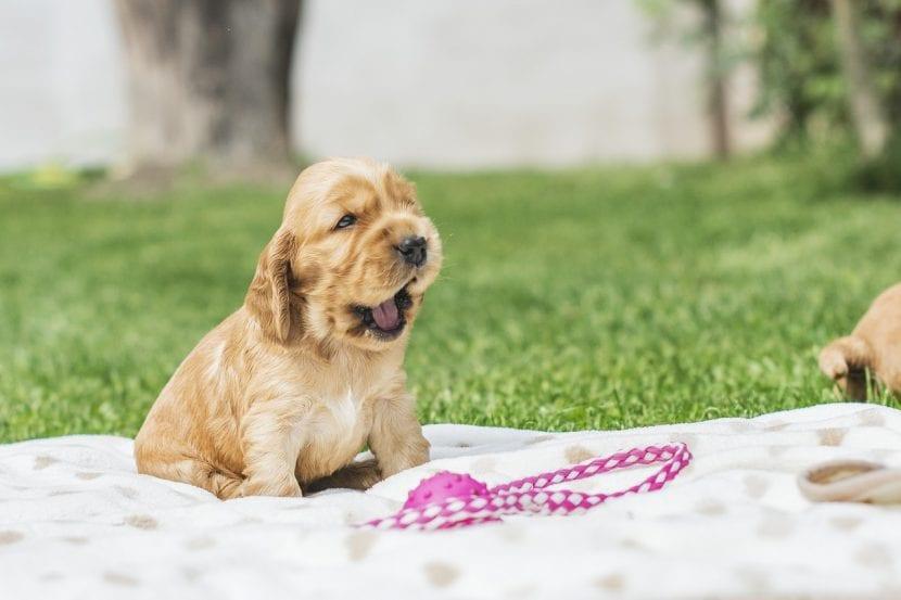 Cachorro de perro jugando