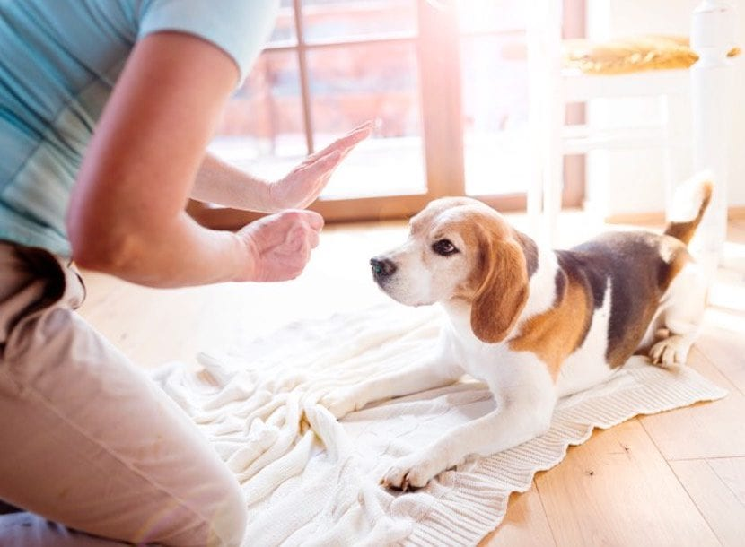 castigar-a-tu-perro