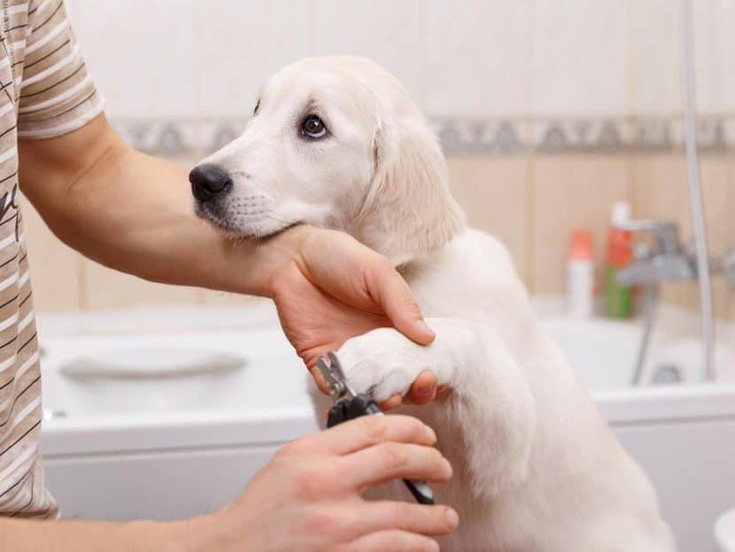Cortar uñas a un perro
