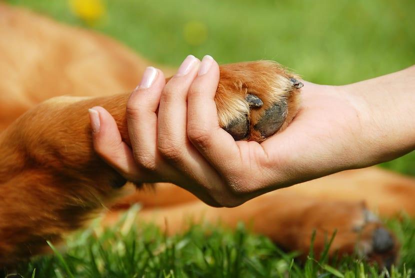 educar-perro