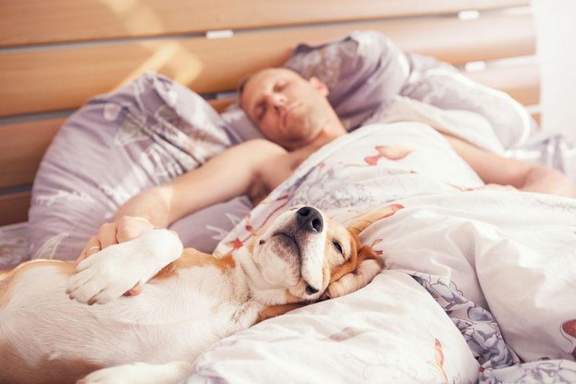 Dejar subir al perro a la cama si o no a dormir con perros - Orientacion cama dormir bien ...