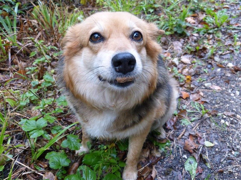 Una dieta adecuada para perros con dermatitis atopica