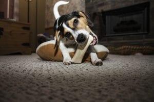 ¿Es saludable darle huesos a nuestro perro?