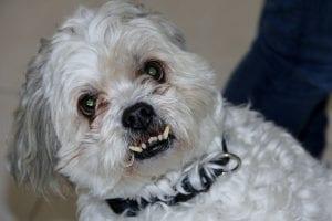 causas perro agresivo