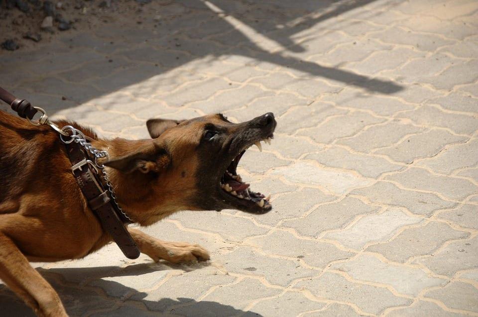 ¿Existen tratamientos efectivos ante un perro agresivo?