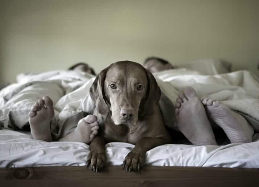 dejar subir perro cama