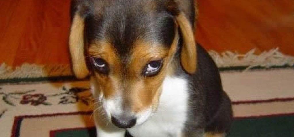 perro-castigo