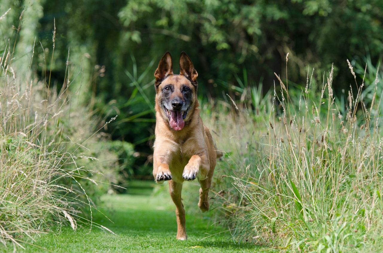 Los perros bien cuidados no suelen escaparse