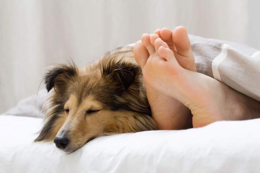 perro-durmiendo-cama
