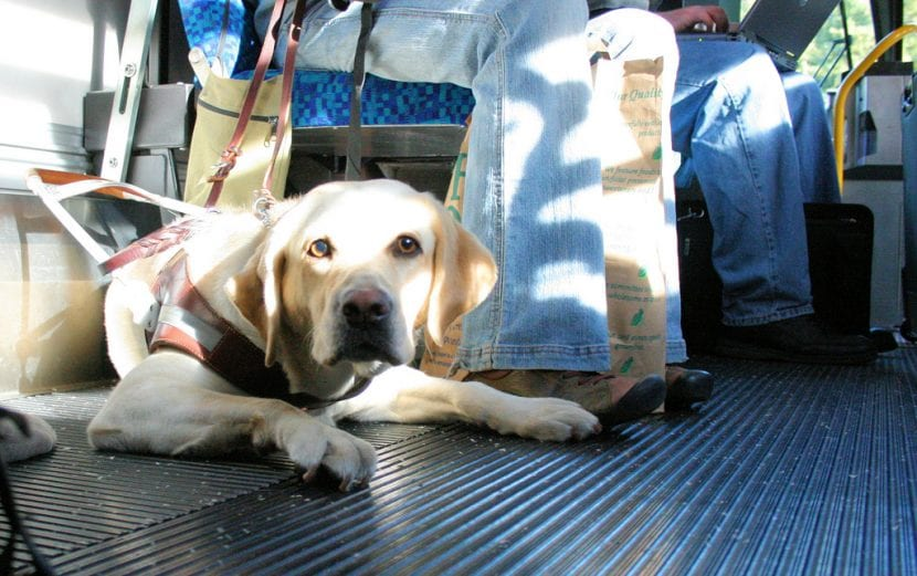 Perro en el bus