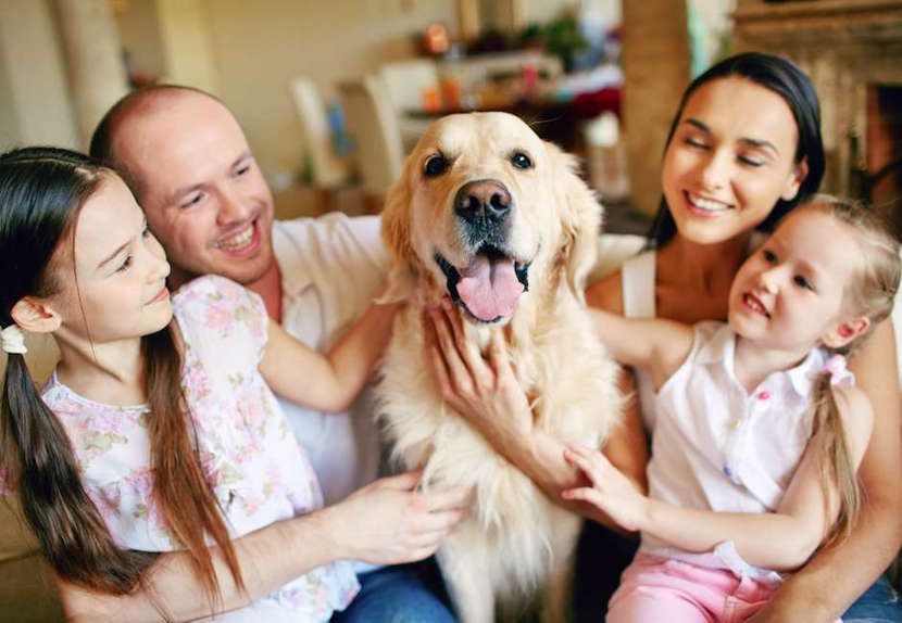 perro-feliz-educacion