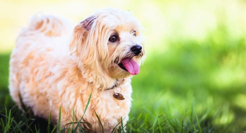 Precioso y dulce perro