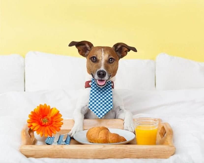 A veces no es muy bueno que los perros coman comida de humanos