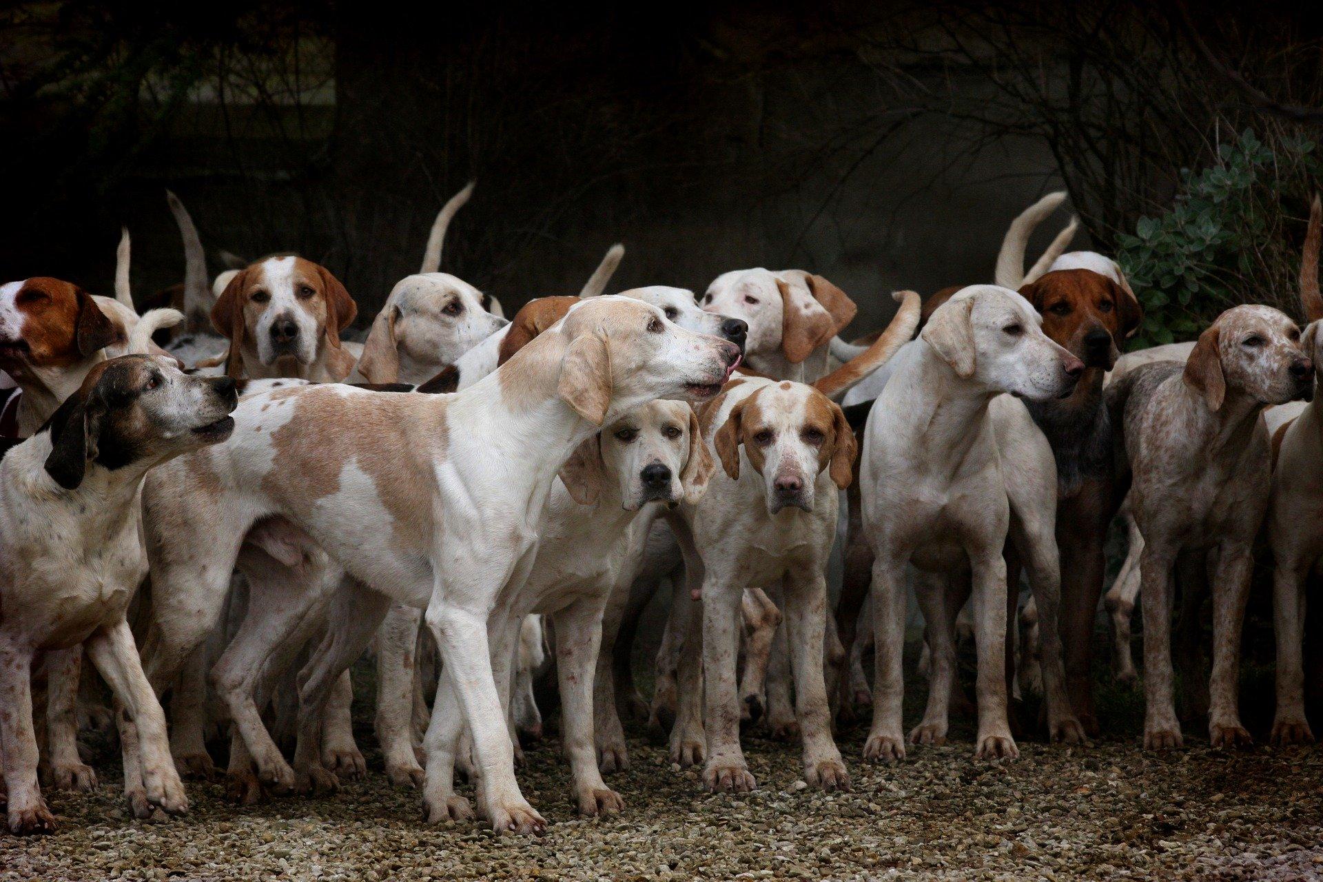 Los perros se aparean varias veces al año