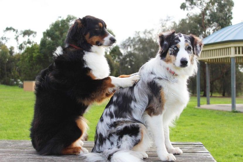 Perros dándose un masaje