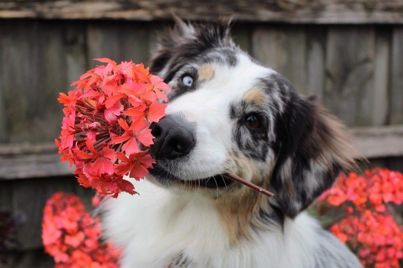 Cuida de tu perro de forma natural