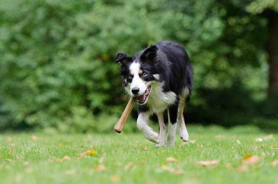 Tipos de huesos para perros