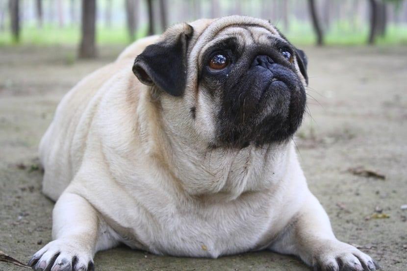 Consejos para recuperar la forma de tu perro