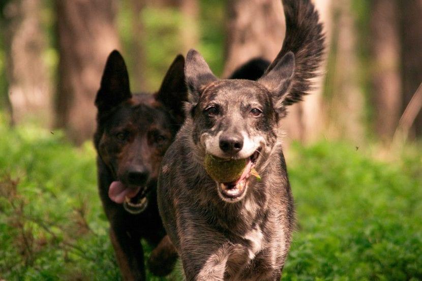 Los perros necesitan jugar mucho para ser felices