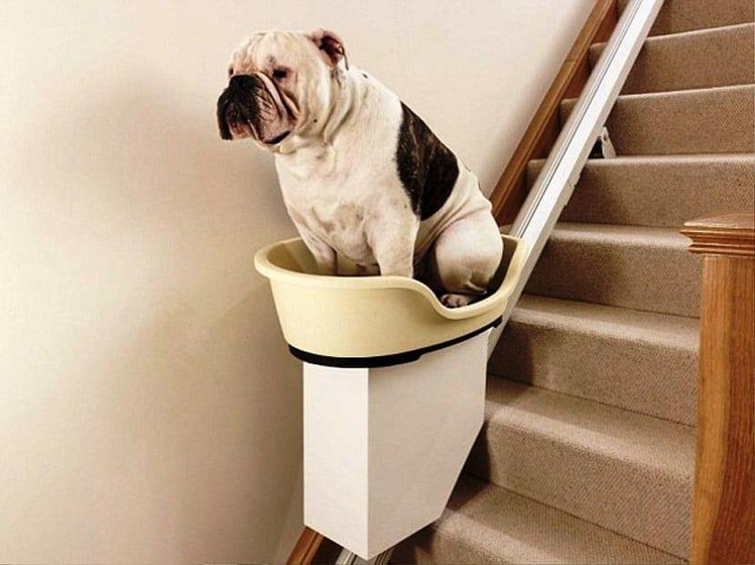 Pautas a seguir para que nuestro perro baje las escaleras