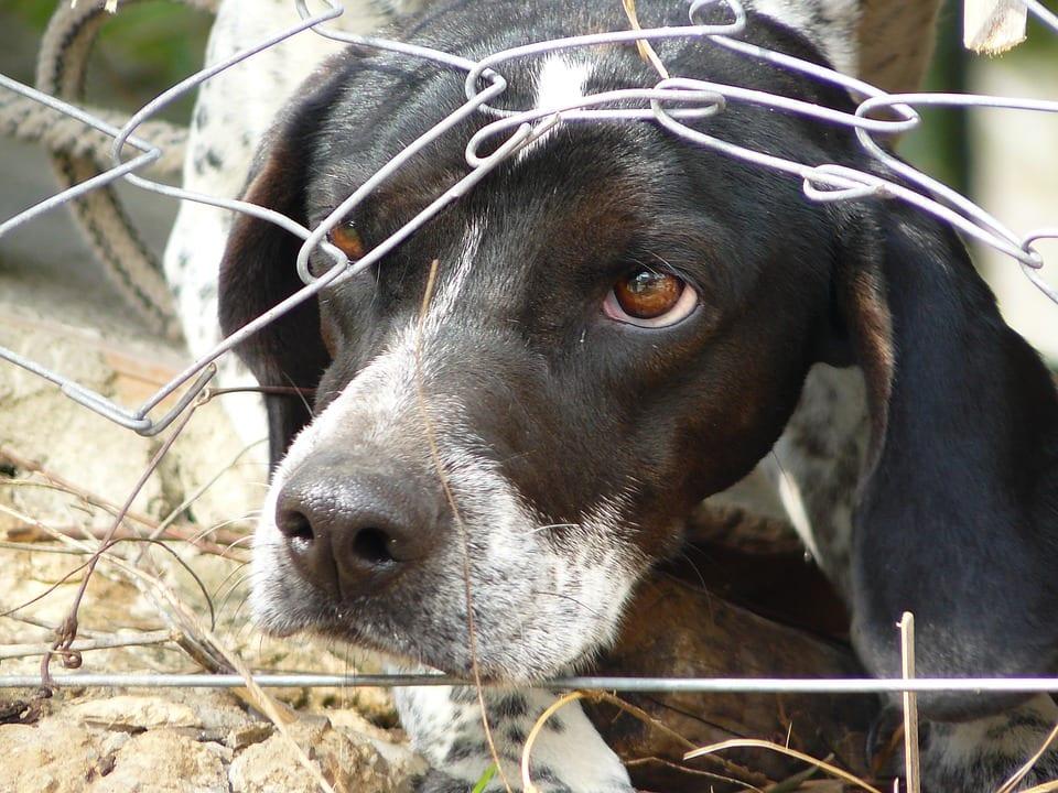 Principales causas de miedo en los perros