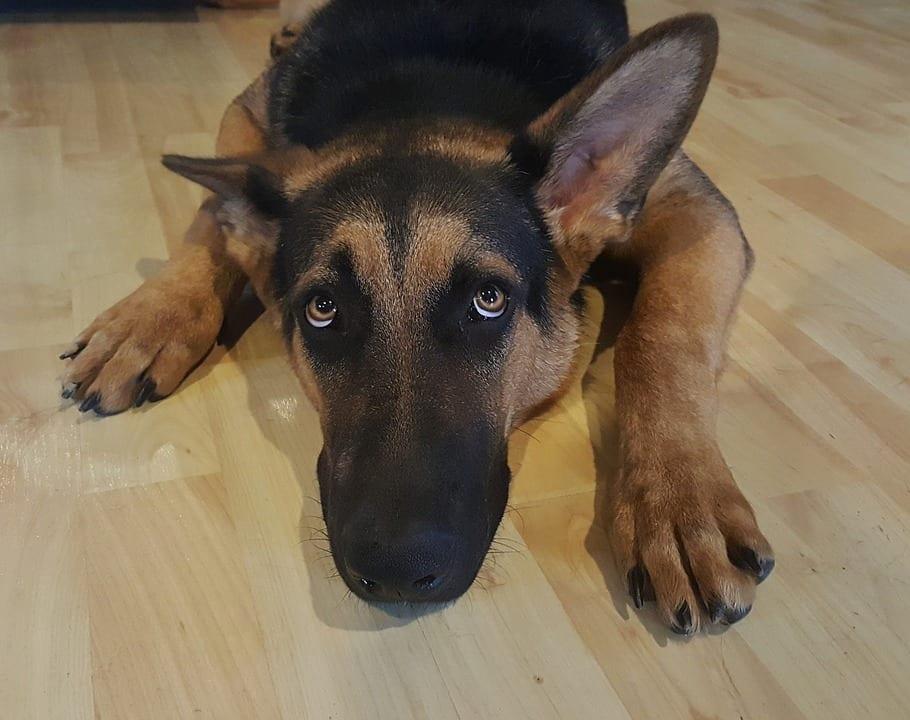 calmar a un perro que teme los ruidos fuertes