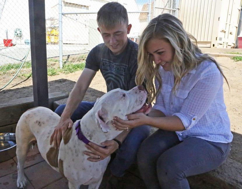 Perro adoptado con su nueva familia