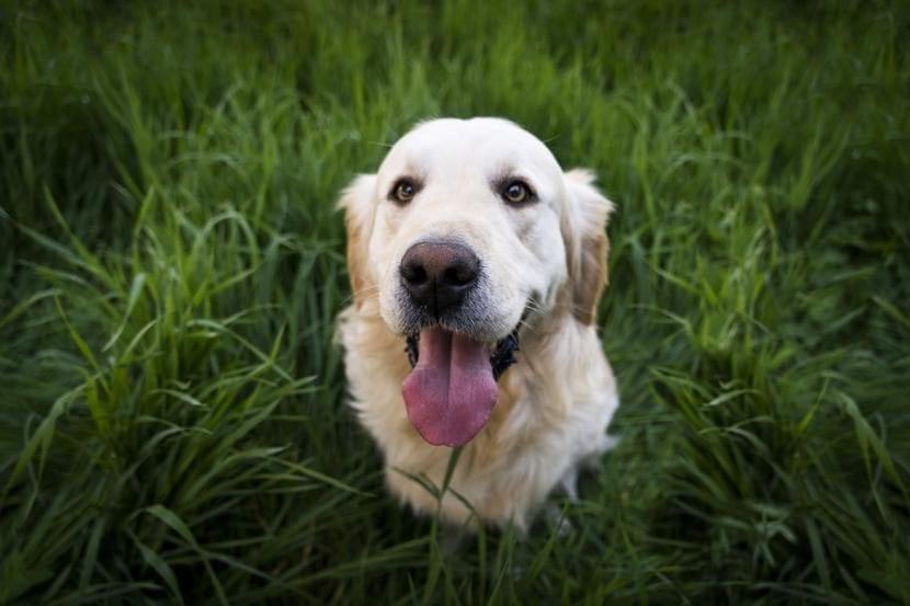Aprovecha para darle premios a tu perro cada vez que se porte bien