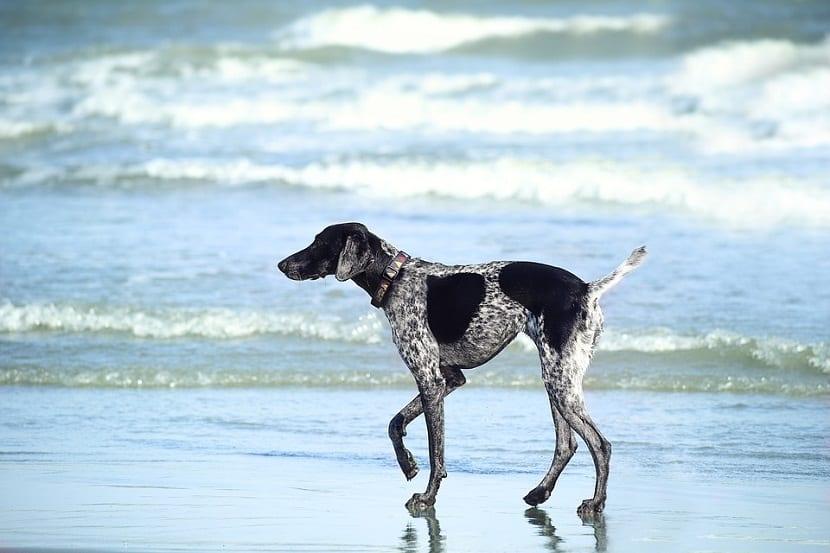agua de mar para la piel de nuestro perro