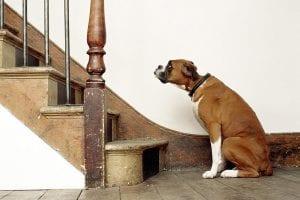 perro que tiene miedo de las escaleras