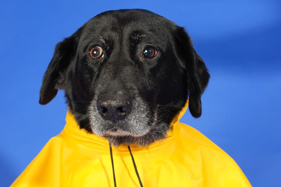 Consejos para pasear al perro con lluvia