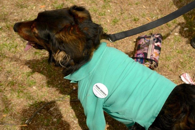 Perro con jersey