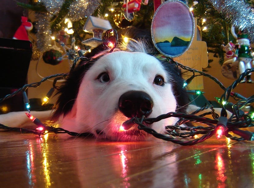 disfrutar de las vacaciones de Navidad