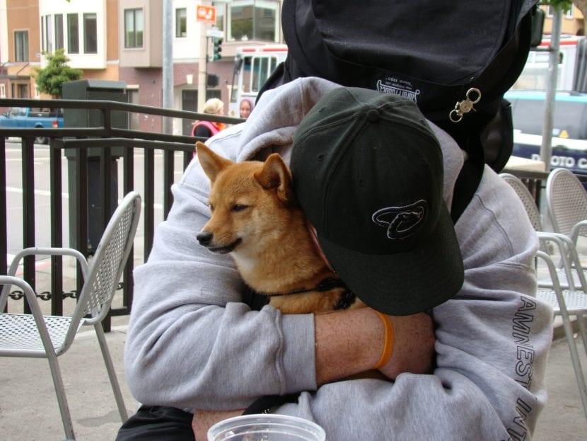 Dale mucho cariño a tu perro para que sea feliz
