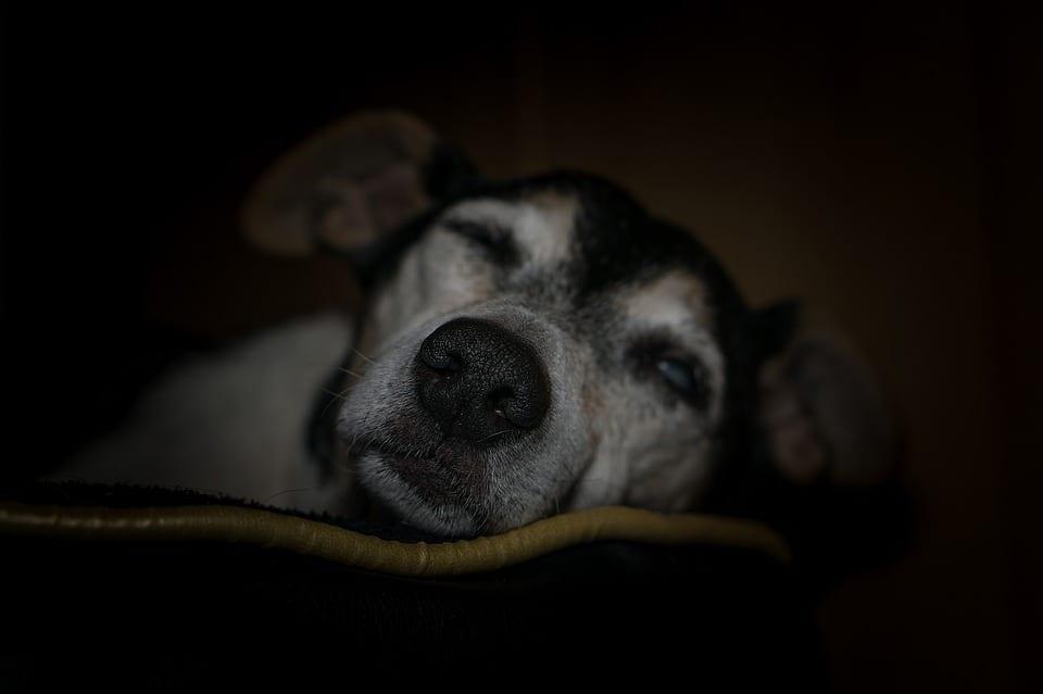 Cualquiera puede vivir con un perro minusvalido