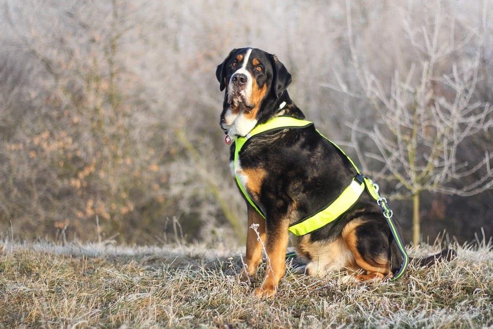 Debes de saber que no todos los perros envejecen a la misma velocidad