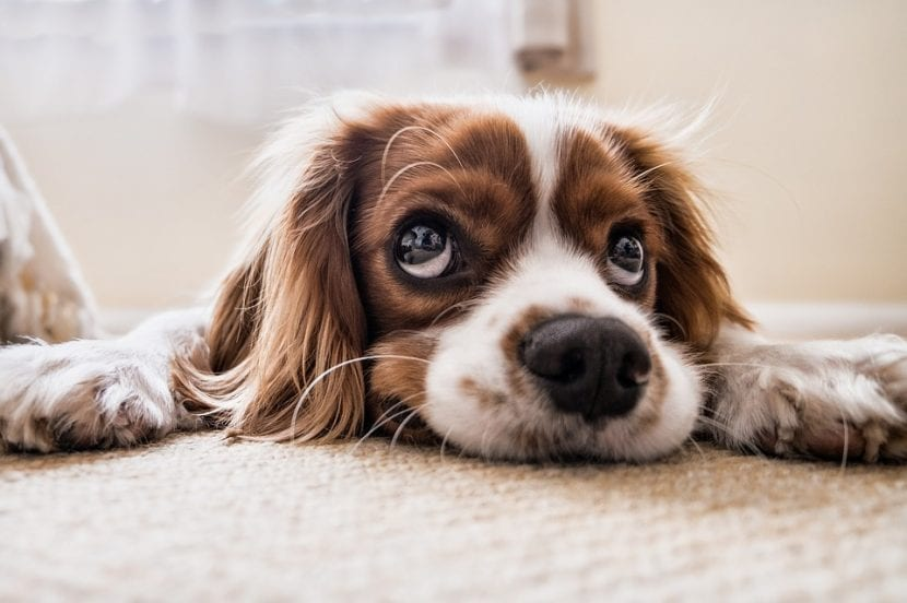 Si tu perro se atraganta, ayúdale