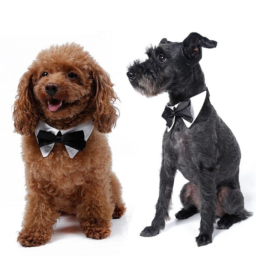 Perros con pajarita