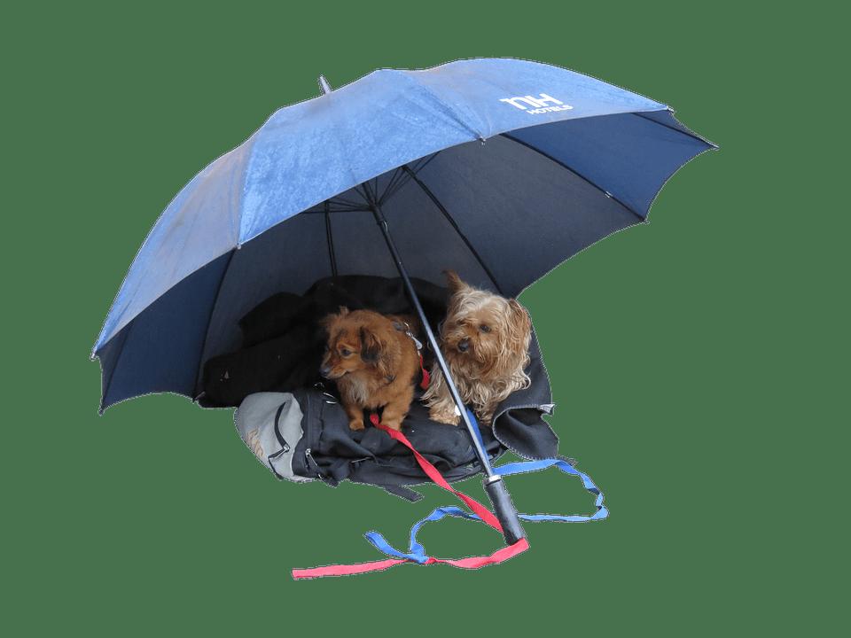 utiliza Paraguas para perros