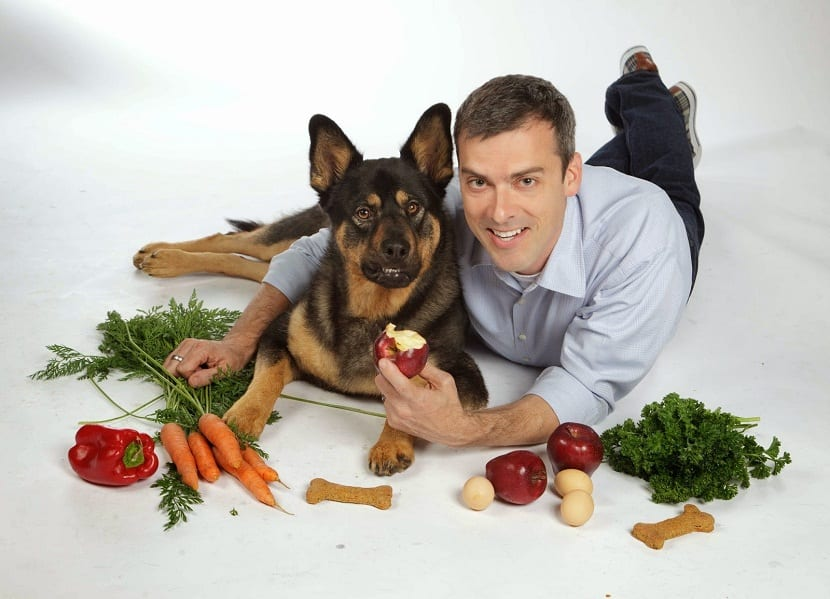 alimentacion perros