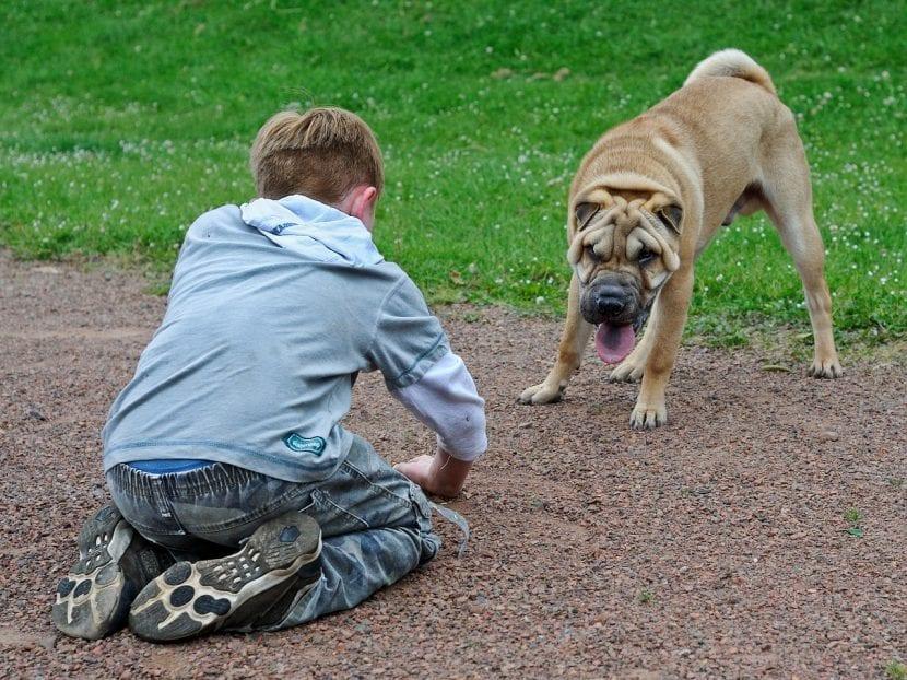 Juega con tu perro siempre que puedas