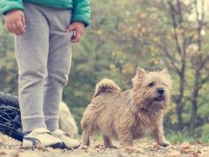 Como presentar a un niño un perro