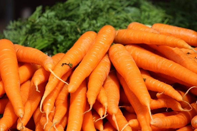 Dale a tu perro zanahorias para mejorar su salud