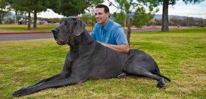 Giant George junto a su dueño, Dave Nasser.